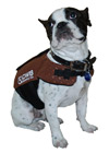 CWB - Otis Dog Vest